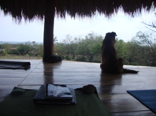 One of the local pups chilling on the yoga platform.