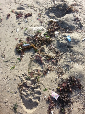 Litter washed in by the waves.
